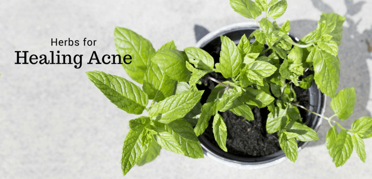 Ayurvedic herbs for acne