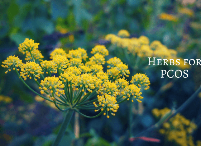 Ayurvedic herbs for PCOS