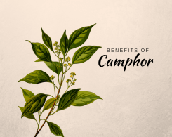 camphor uses in Ayurveda
