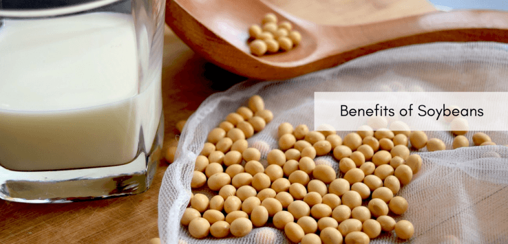 soybean benefits