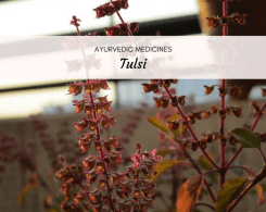 tulsi benefits and side effects