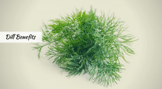 dill health benefits