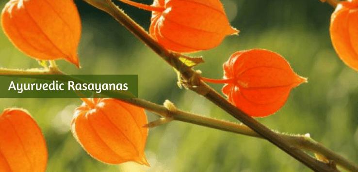 ayurvedic rasayana herbs