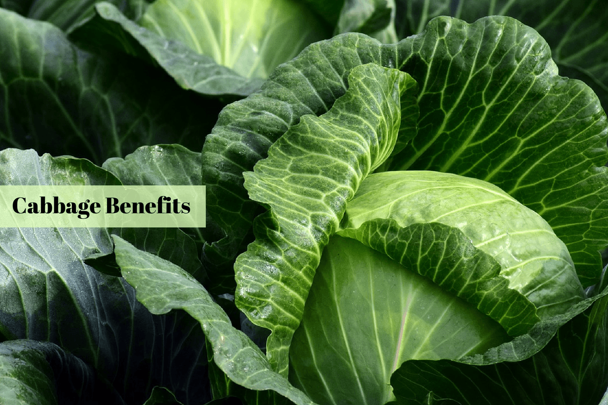 Why Add Cabbage To Your Diet – From Weight Loss To Heart ...