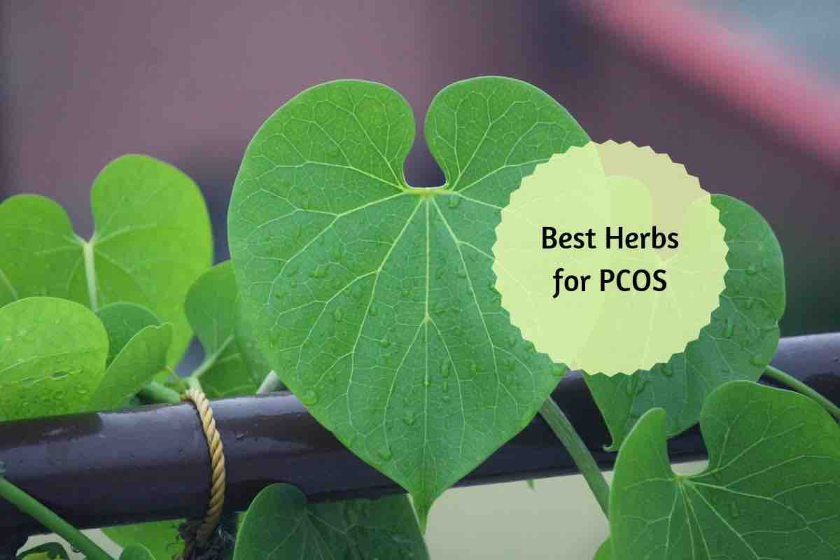Top 4 Ayurvedic Herbs for PCOS and 5 Simple Diet Tips