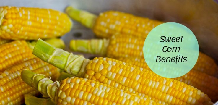 sweet corn benefits