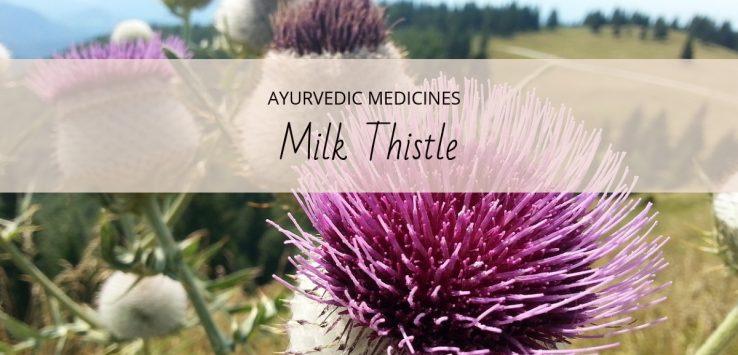 milk thistle uses