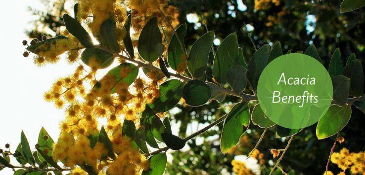 acacia benefits