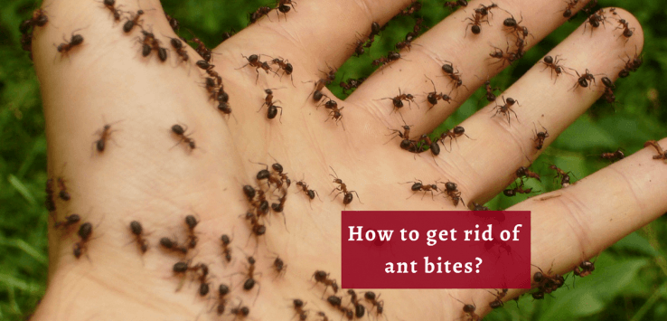 Treatment for Ant Bites_Ayurvedum