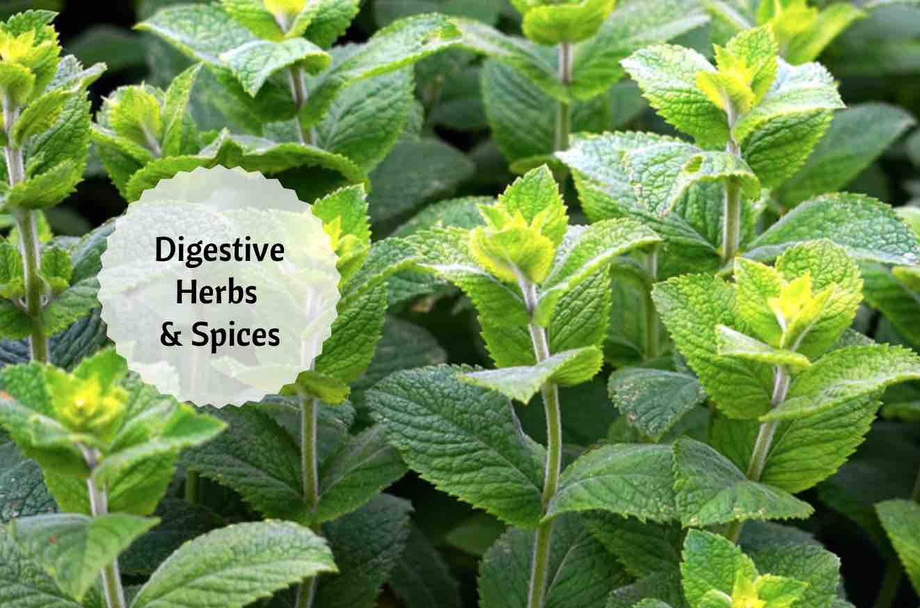 digestive herbs and spices