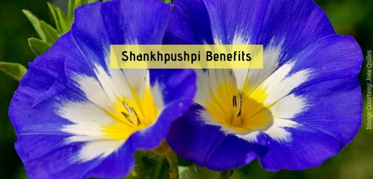 Shankhpushpi Benefits _ Ayurvedum