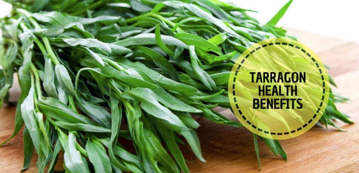 What is Tarragon _ Ayurvedum