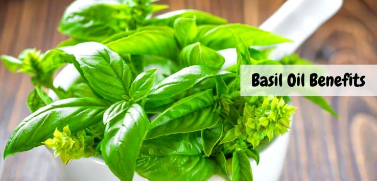 Basil Oil Benefits _ Ayurvedum