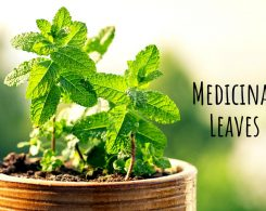 Herbal leaves _ Ayurvedum