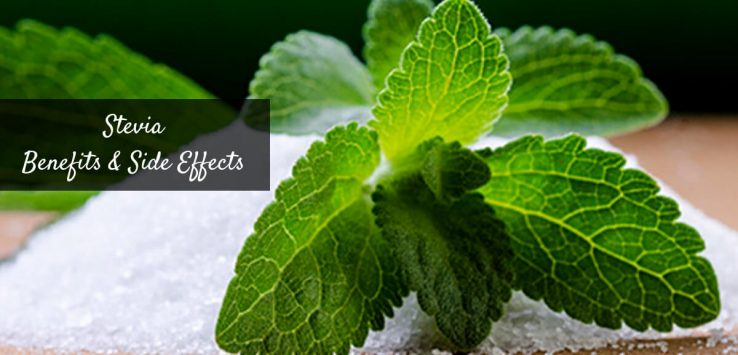 Is stevia safe _ Ayurvedum