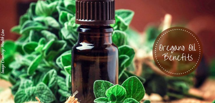 Oregano oil benefits _ Ayurvedum