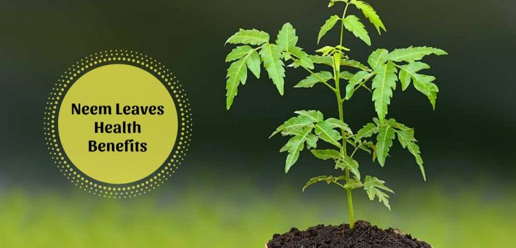 Benefits of neem leaves _ Ayurvedum