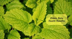 Lemon balm benefits _ Ayurvedum