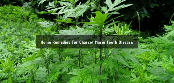 charcot marie tooth disease _ Ayurvedum