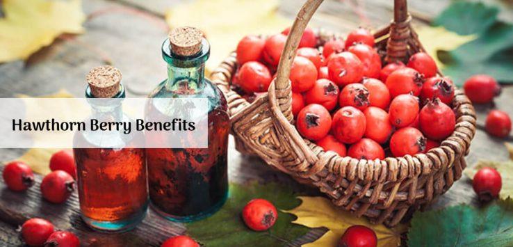 Hawthorn Berry Benefits _ Ayurvedum