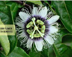 Passion Flower Benefits _ Ayurvedum (1)