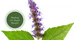 patchouli oil benefits_ Ayurvedum