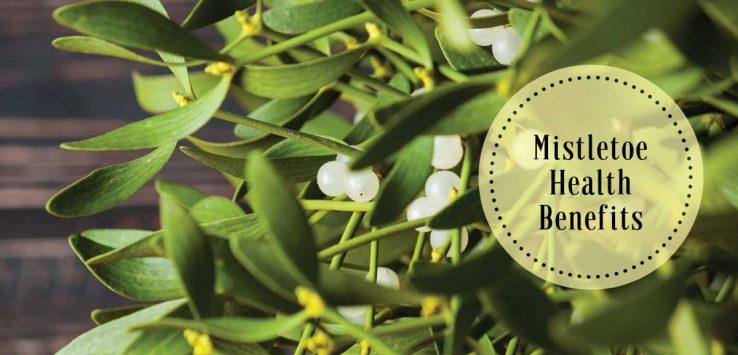 What is mistletoe _ Ayurvedum