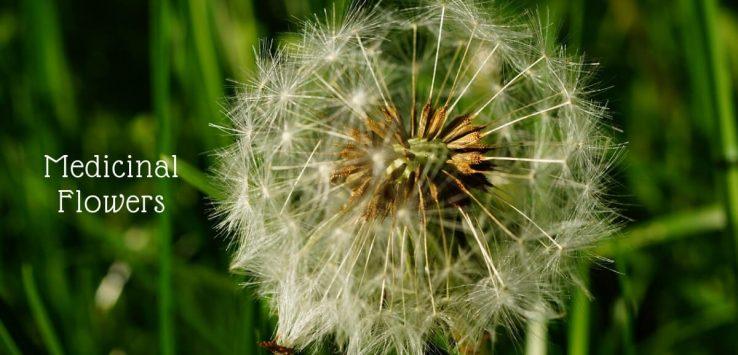 medicinal flowers _ Ayurvedum