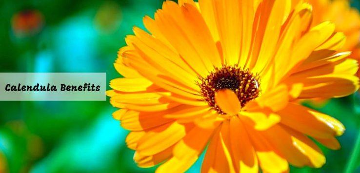 Calendula Flower _ Ayurvedum