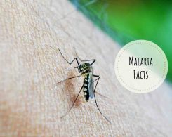 malaria facts