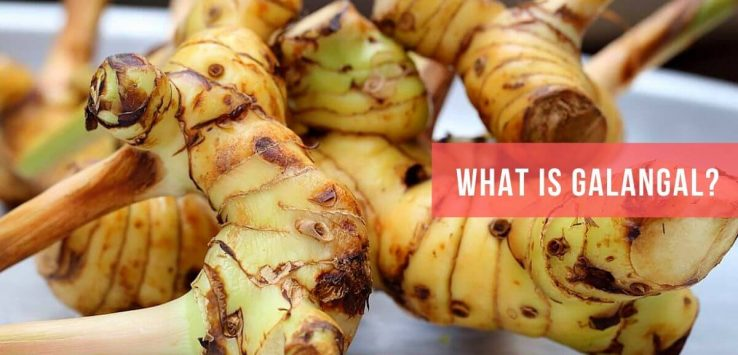 What Is Galangal _ Ayurvedum